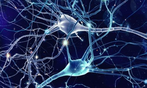 l'osteocalcina permette una migliore connessione cerebrale
