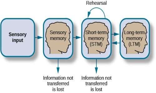 Modello della memoria di Atkinson e Shriffin. La memoria sarebbe la funzione cognitiva maggiormente colpita nella sindrome di capgras.