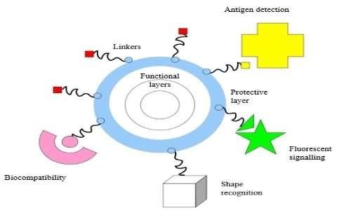 Struttura delle nanoparticelle e tipologia di molecole legate in uso in nanomedicina