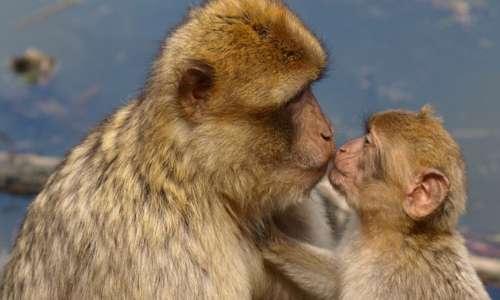 Gli animali hanno coscienza perchè si riconoscono allo specchio