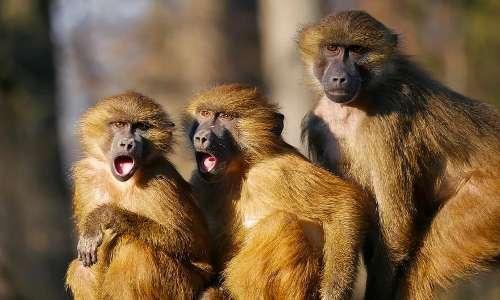 Gli animali hanno coscienza perchè sono in grado di provare emozioni.