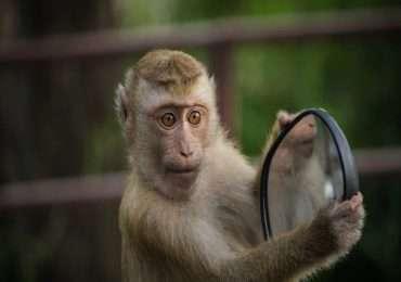 Gli animali hanno coscienza come noi esseri umani?