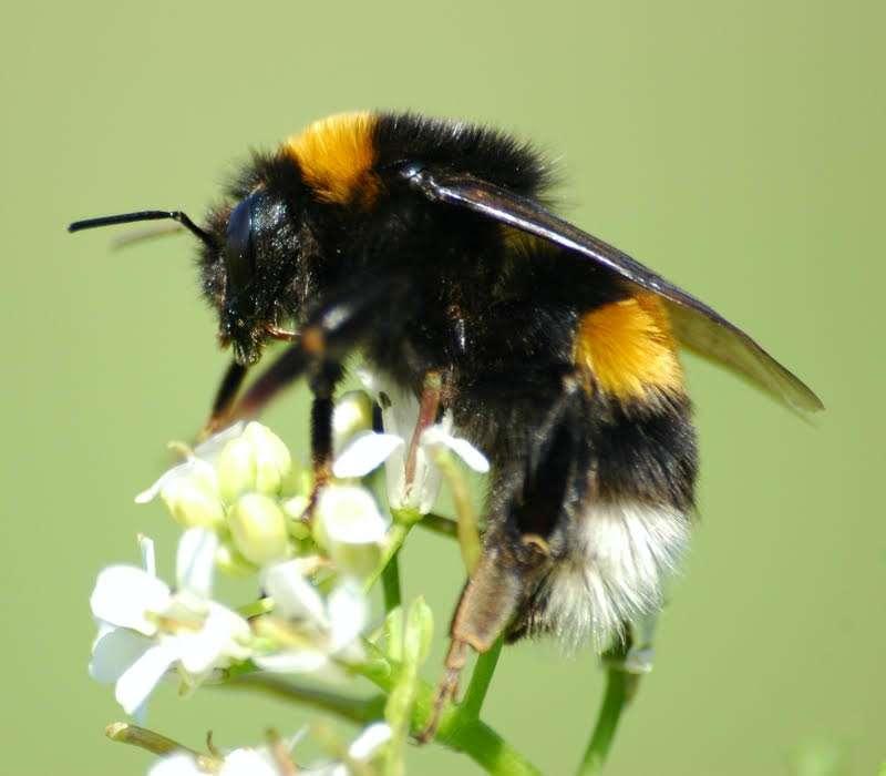 Il volo del calabrone è una delle leggende scientifiche più gettonate.
