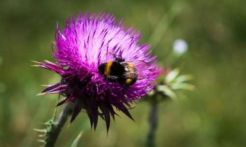 Il volo del calabrone è stato oggetto di numerosi studi scientifici.