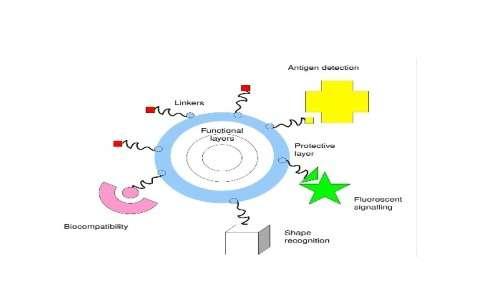 Struttura delle nanoparticelle e tipologia di molecole legate
