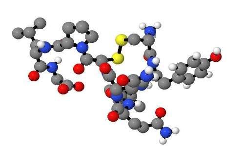 Molecolarmente, la vasopressina sembra essere molto simile all'ossitocina.