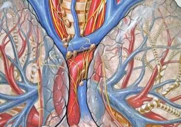 La fibrosi cistica, fino al 1930, non era ancora completamente conosciuta.
