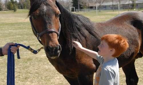 L'ippoterapia è ormai utilizzata in caso di svariati disturbi psicomotori. Da un punto di vista psicologico, sembra che il rapporto con l'animale riesca a rendere il soggetto più consapevole di sé stesso e più incline ad aprirsi al prossimo.