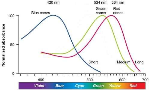 Spettri di assorbimento dei tre coni, sui quali operano le lenti EnChroma.