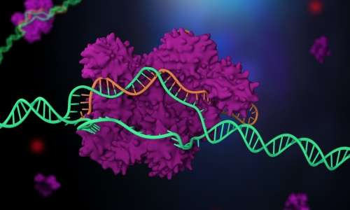 CRISPR sta per Clustered Regularly Interspaced Short Palindromic Repeats (brevi ripetizioni palindrome raggruppate regolarmente interspaziate).