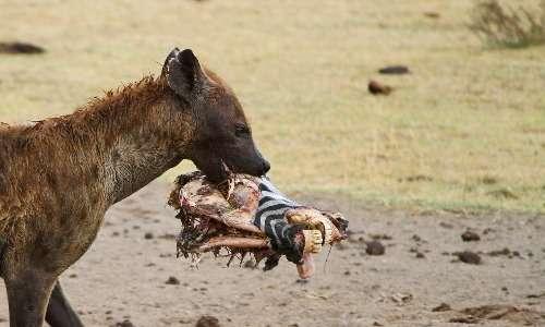 modello-preda-predatore