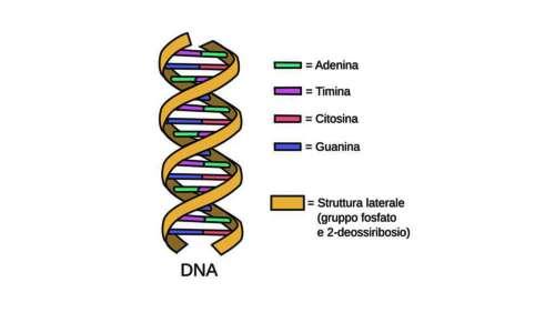 Estrazione DNA banana è facilmente praticabile non in laboratorio.