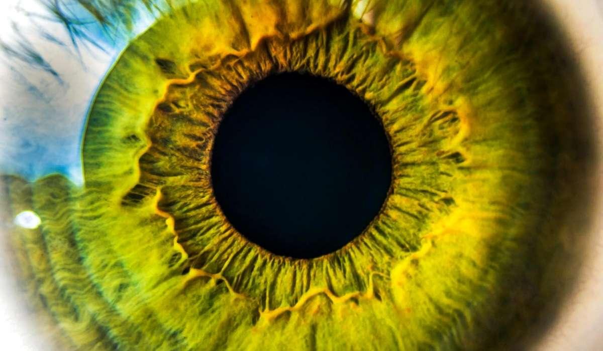 Quale porzione dell'occhio ha funzione di diaframma?
