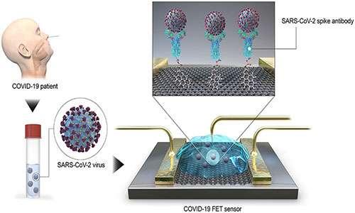 Test rapido per il coronavirus tramite biosensore.