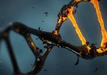 I telomeri hanno un ruolo cruciale nell'invecchiamento cellulare.