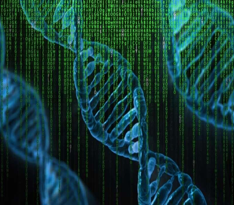 Il DNA non codificante svolge un ruolo fondamentale nel nostro organismo.