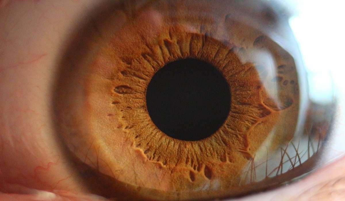 Il nervo ottico arriva al cervello partendo da… ?