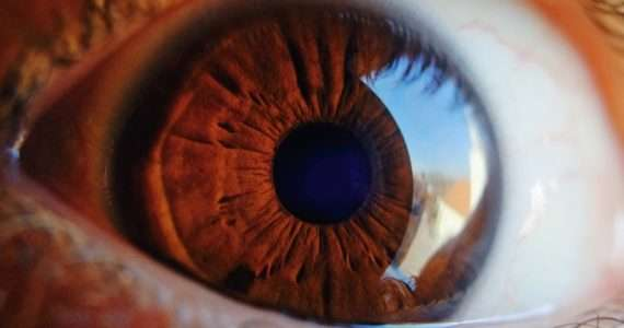 L'occhio è l'organo visivo, più affascinante, in grado di catturare la maggior parte delle informazioni esterne e inviarle al nostro cervello. Ma quanto conosci l'occhio umano?
