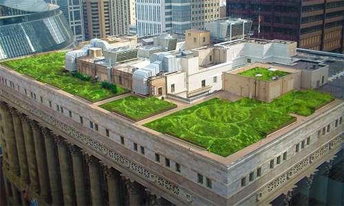 Un tetto giardino è stato istallato sul tetto del municipio di Chicago