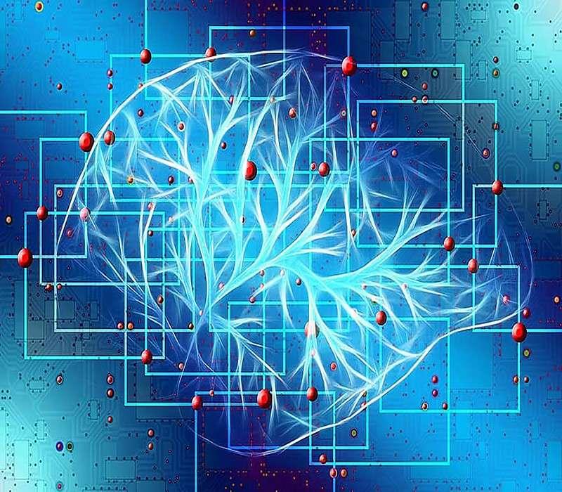 Disegno circuiti neuronali nella memoria a breve termine.