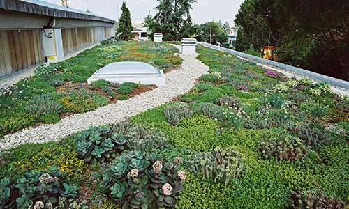 Il tetto giardino estensivo