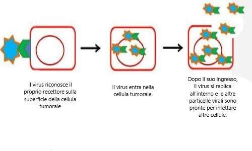 Come i virus oncolitici aggrediscono ed infettano le cellule cancerose.