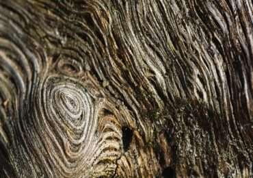 fotoluminescenza del legno
