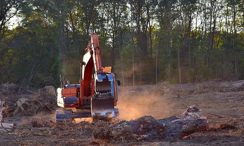 La deforestazione da parte dell'uomo fa aumentare il rischio di salto di specie.
