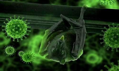 Possibile responsabile del salto di specie del Sars-Cov-2 è il pipistrello.