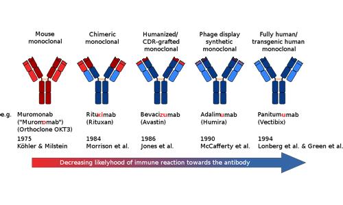 Nomenclatura degli anticorpi monoclonali.