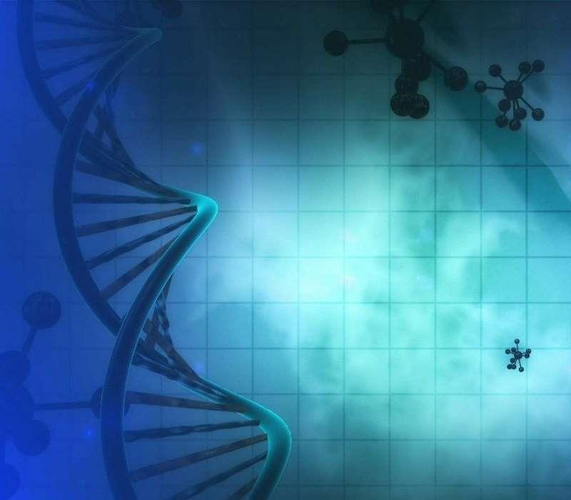 La telomerasi ha un ruolo fondamentale durante la duplicazione del DNA.