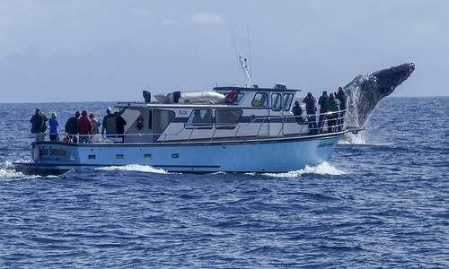Le imbarcazioni possono spesso ferire alcuni organismi marini urtandoli, oltre a causare forte rumore subacqueo.