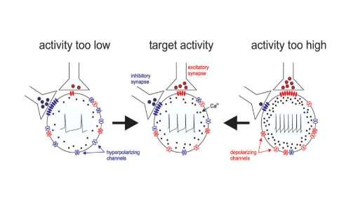 Traduzione RNA e canali ionici