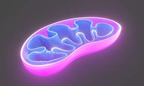 Le caspasi lavorano a stretto contatto con i mitocondri