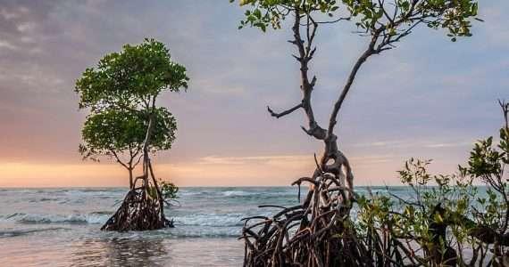 Le foreste di mangrovie sono un ecosistema importante anche per l'uomo.