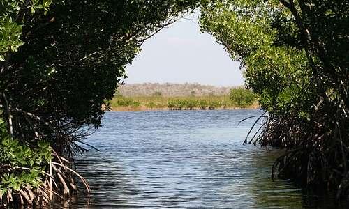 Le foreste di mangrovie offrono diversi servizi ecosistemici, tra cui la riduzione dell'effetto serra.