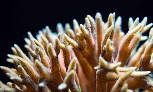 Polipi e meduse sono fasi di un ciclo vitale complesso, anche se non tutti gli cnidari hanno entrambe le fasi nel corso della vita.